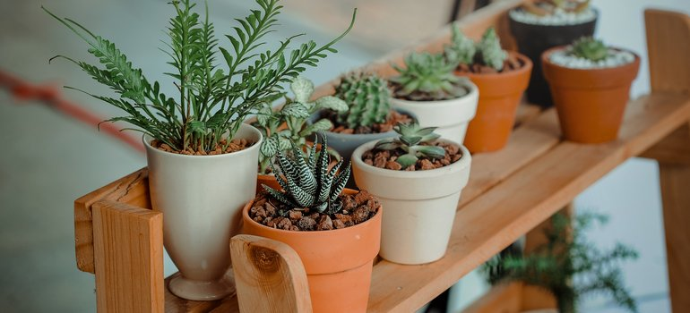 Green indoor potted plants.