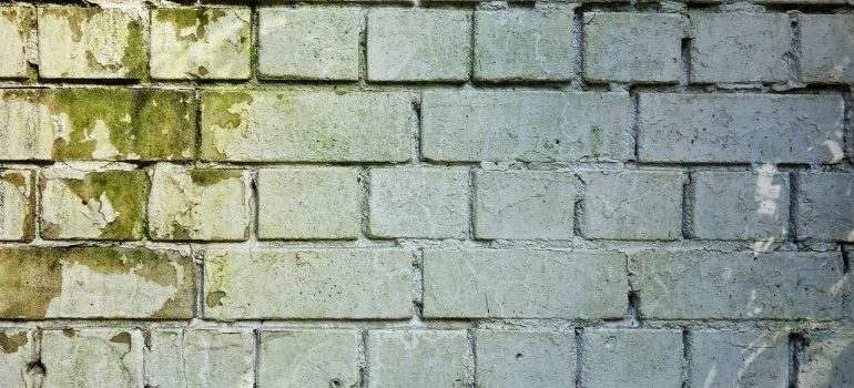 Mold on a brick wall that you should check your storage for.