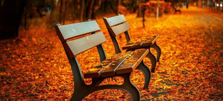 Benches in the Fall.