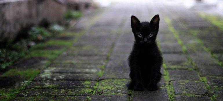 A small black cat.
