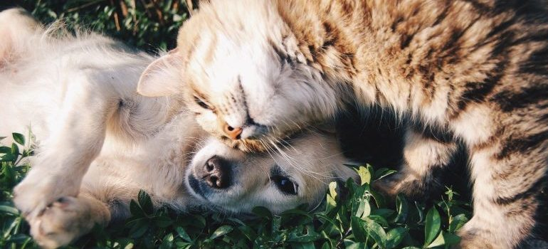 A puppy and a cat.