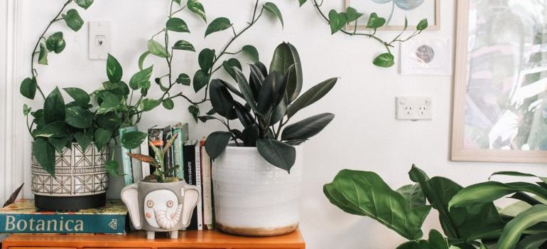 image of plants in a room